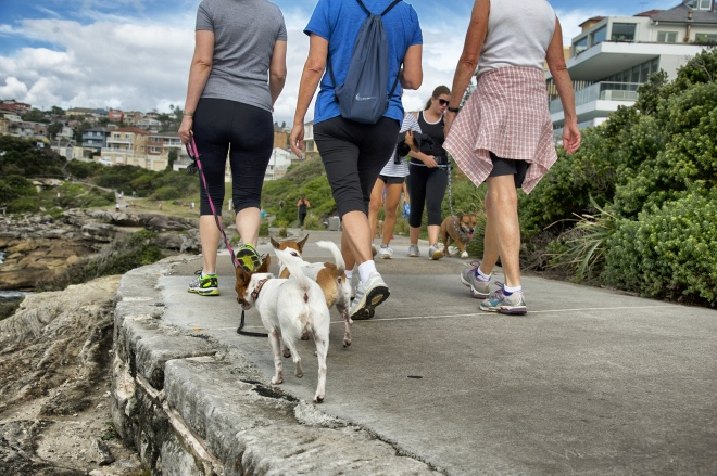 People walking dogs on Bondi coastal walk