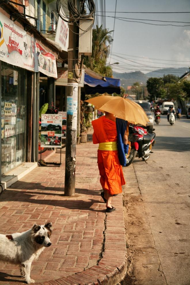 Monk in Luang Prabang